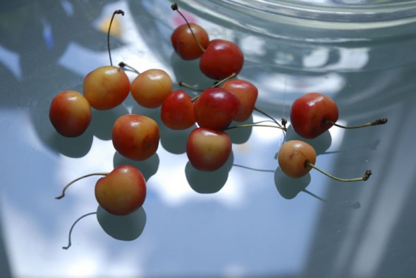 White or Princess Anne cherries on glass table, New York
