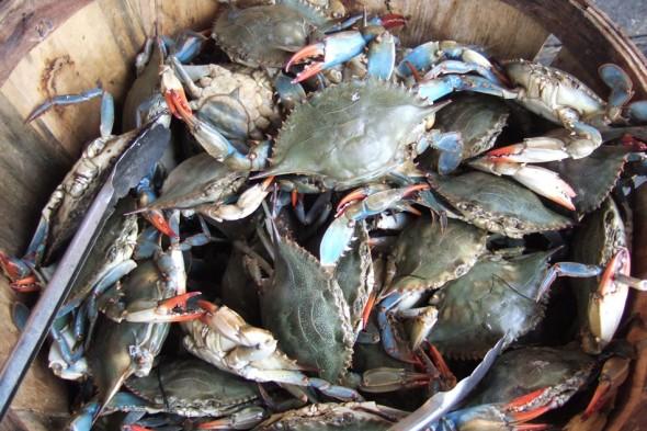 Crabs, Chinatown market, New York
