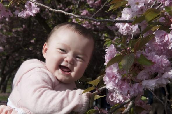 Baby enjoys Cherry tree blossoms, Brooklyn Botanic Garden, 2009